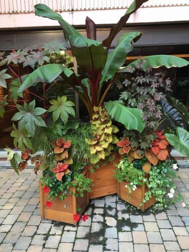 Planters upper courtyard Summer 2017